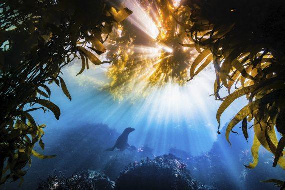 Вспышка, Тайлер Шиффман, США. Калифорнийский морской лев в заливе Монтерей. Главный приз конкурса